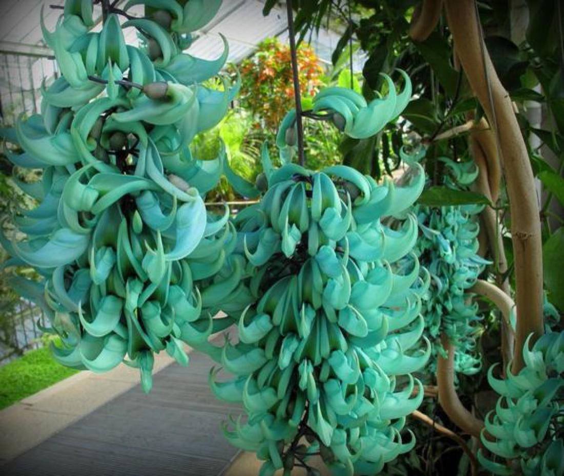 ТОП-10 самых необычных цветов на планете