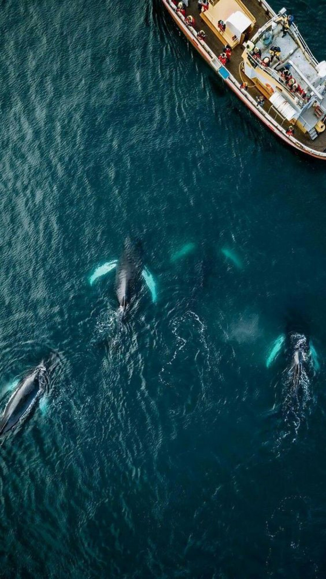 Хусавик - место, где обитают киты