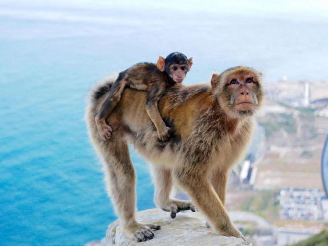 Гибралтар: Маленькая страна, согретая солнцем