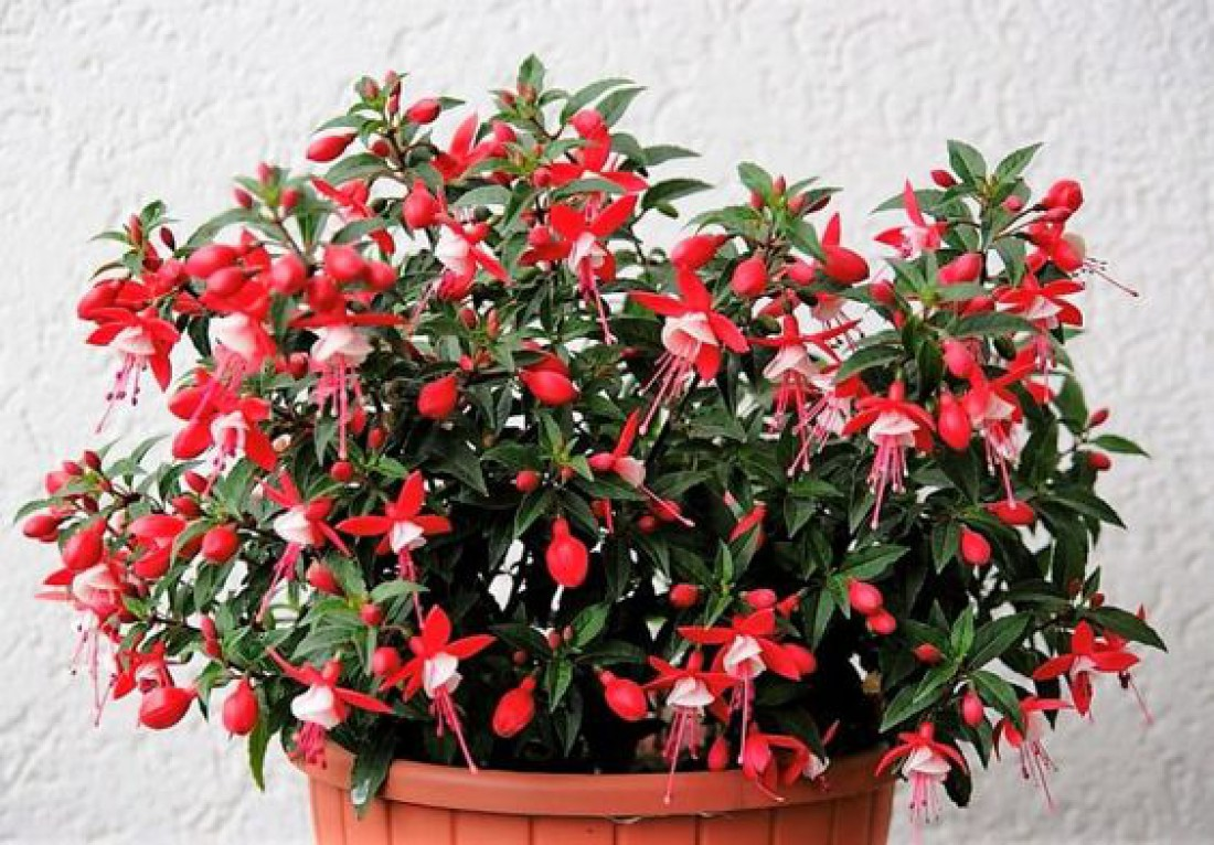 Комнатные растения: положительная и отрицательная энергетика