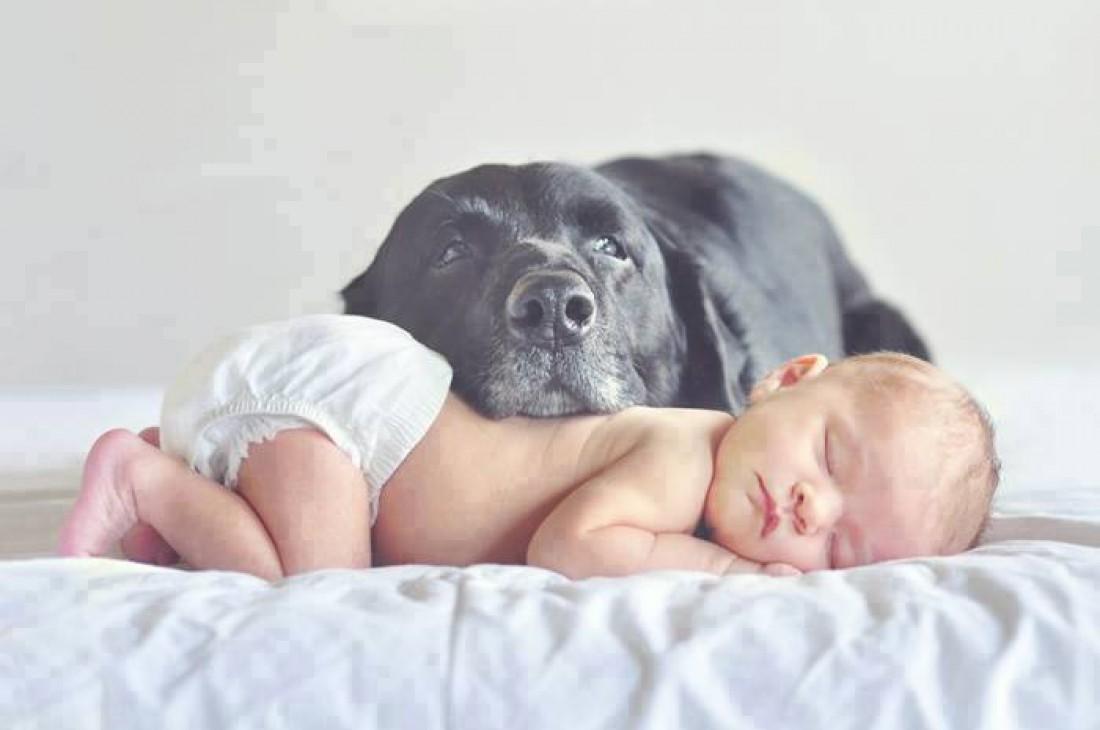 Собаки – прекрасные няньки для малышей