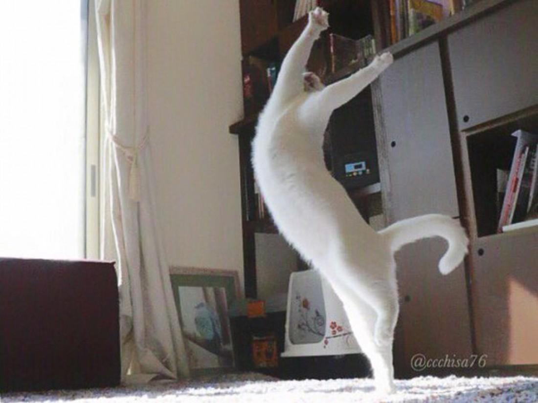 Чем заняты коты, когда никто не видит