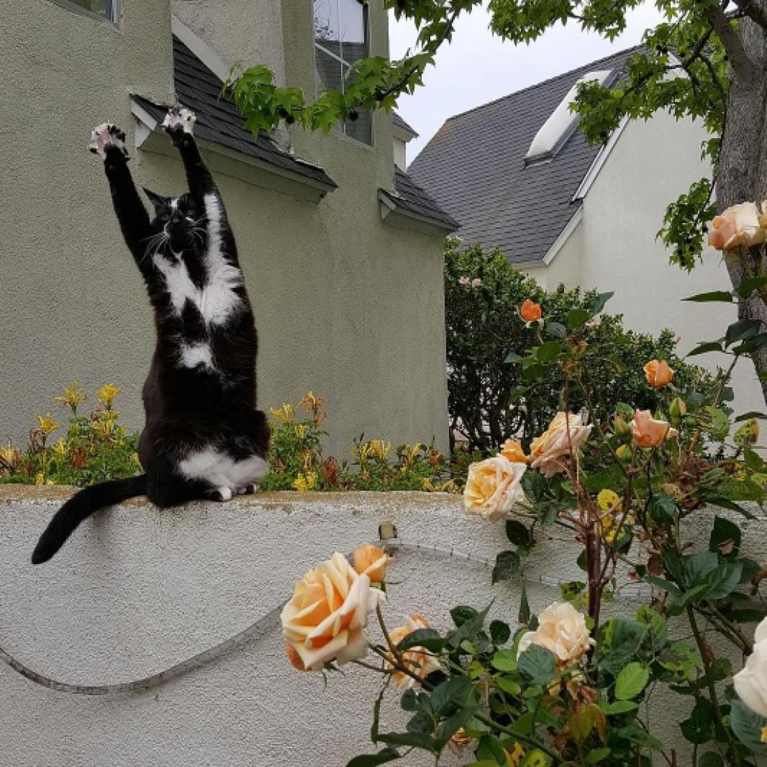 Кошка Кис покорила соцсети