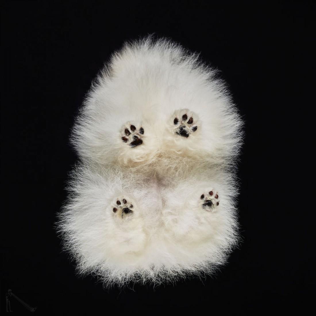 Милый щенок - вид снизу