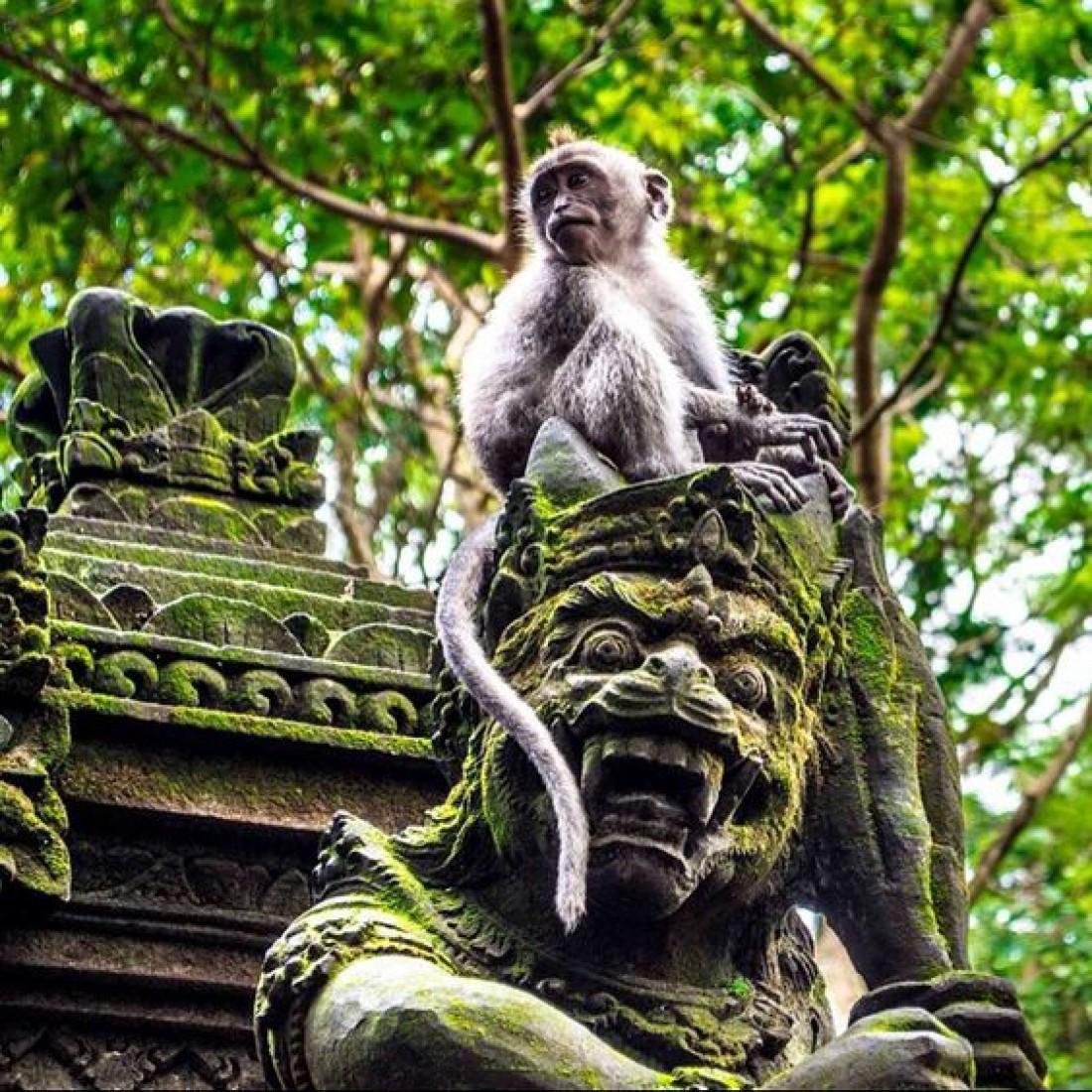 Житель леса обезьян в Убуде