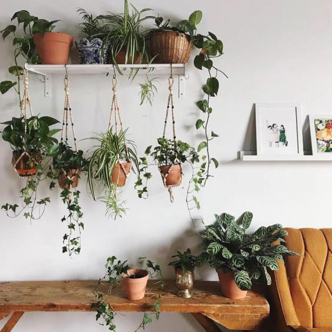 Лунный календарь комнатных растений на сентябрь 2019