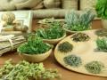 Какие травы используют для лечения печени
