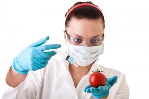 Закон о запрете ГМО вступит в силу 1 января 2012 года