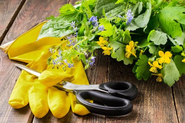 Съедобные дикорастущие травы содержат железо и витамины