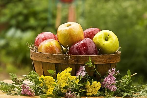Яблоки подходят для разгрузочных дней