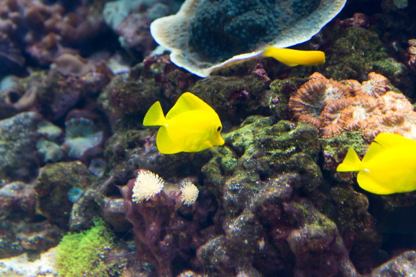 Выставка аквариумных рыб и растений фото