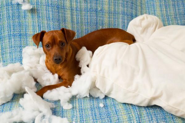 Что делать, если собака портит вещи