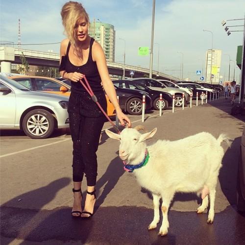 Глюкоза встретила в Москве козу по имени Маша