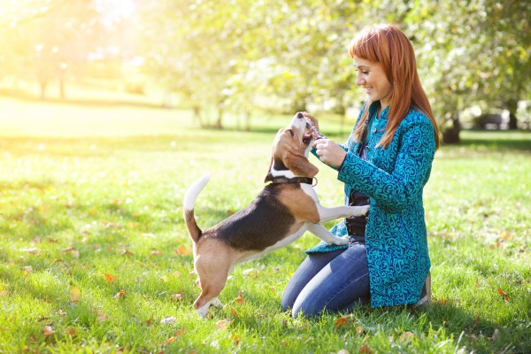 Как понять язык тела собак
