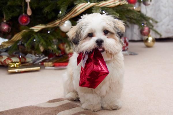 Католическое Рождество отмечают 25 декабря