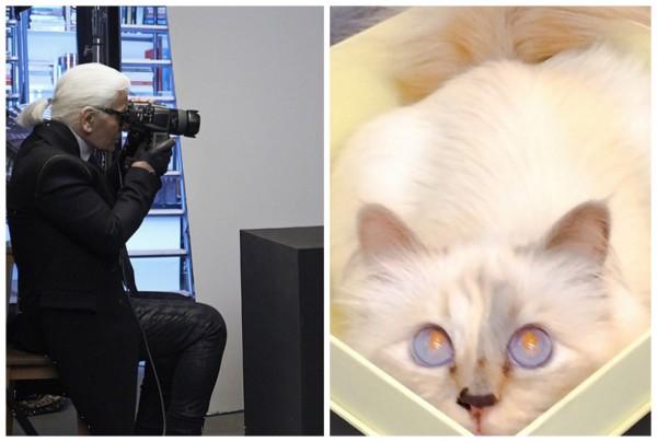 Кошка Карла Лагерфельда позирует для рекламы