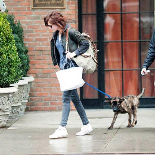 Кристен Стюарт очень любит их с Робертом Паттинсоном пса по имени Беар