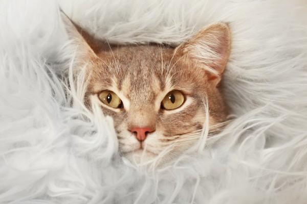 Зимняя кото-ярмарка фото