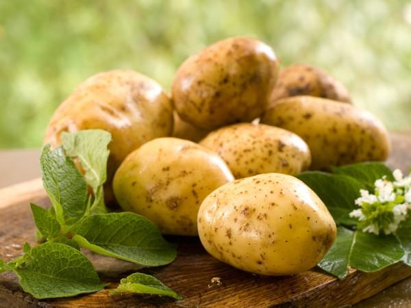 Молодой картофель начинает появляться уже в середине мая