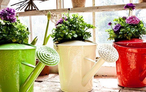 Можно ли поливать комнатные цветы сладкой водой