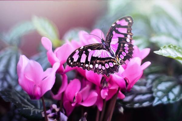 Чтобы привлечь бабочек в сад, нужно учесть несколько важных моментов