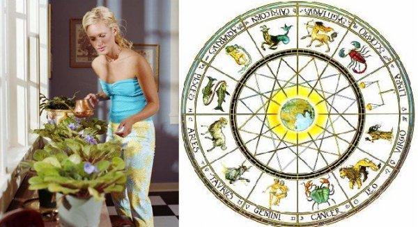 Комнатные цветы знаков зодиака