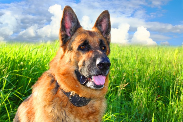 ТОП-15 удивительных фактов о собаках