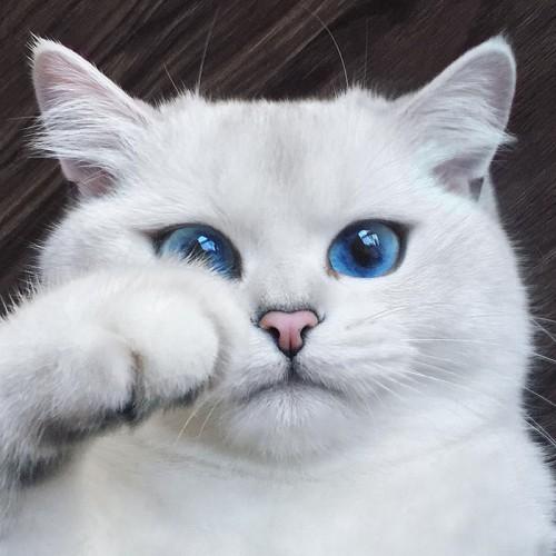 Кот коби в инстаграм