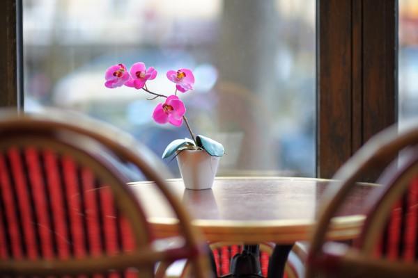Как необходимо ухаживать за орхидеями