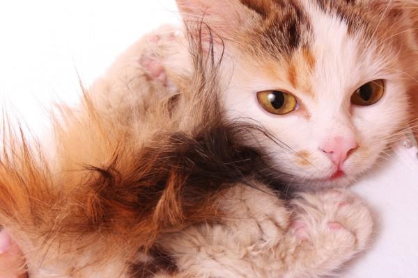 У кота слезятся глаза: что предпринять?