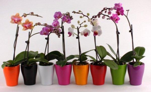 Как нужно поливать орхидею