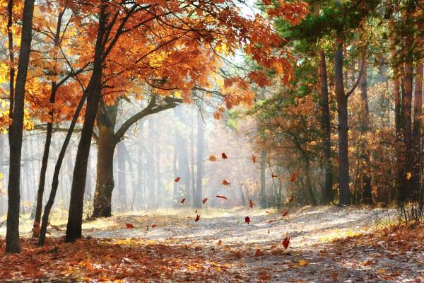 Статусы об осени: позитивные жизненные фразы