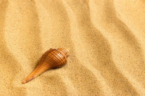 Пляжный песок может являться источником опасных инфекций