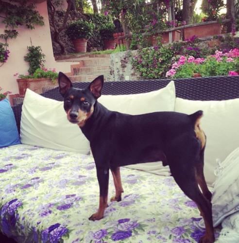 Эту собаку назвали в честь Николая Баскова