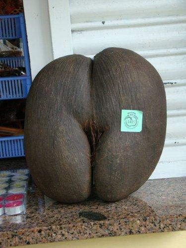 Эти орехи - национальная гордость островова, ведь редкие пальмы, на которых растут необычные плоды, можно найти только в заповеднике Валле-де-Маи на острове Праслин