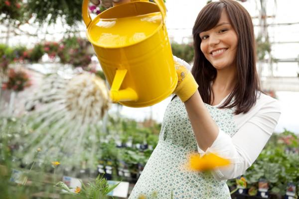 Как выращивать растения без земли и полива