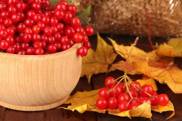 Обилие витамина К делает ягоды калины незаменимыми помощниками сердцу и сосудам