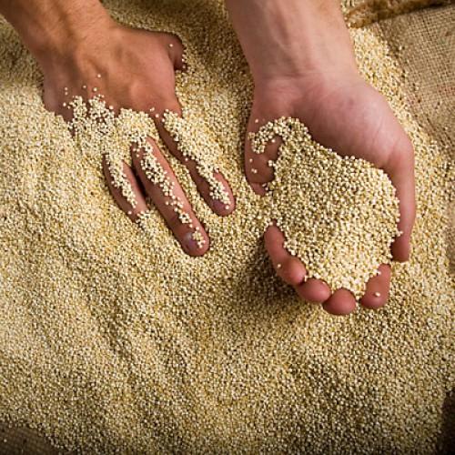 Киноа, кинва, рисовая лебеда - у этой зерновой культуры много названий