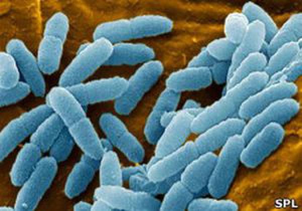 Находить новые антибиотики будет все труднее, предупреждают медики