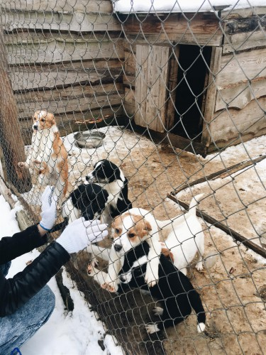 Приют для животных в Украине фото