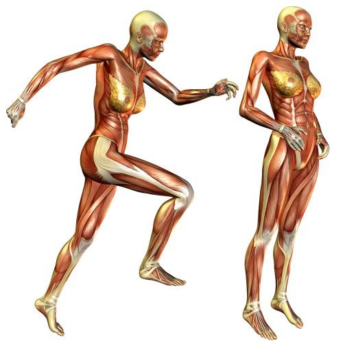 Какие мышцы работают при беге