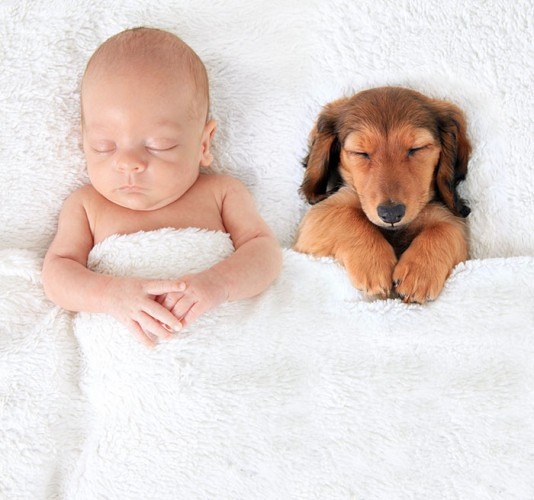 Собака – лучший друг малыша