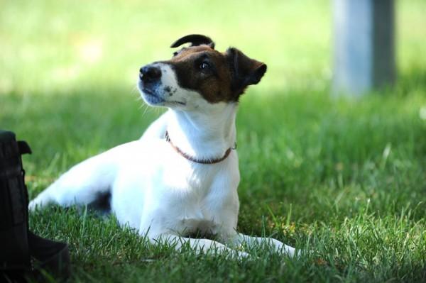 фото пса из