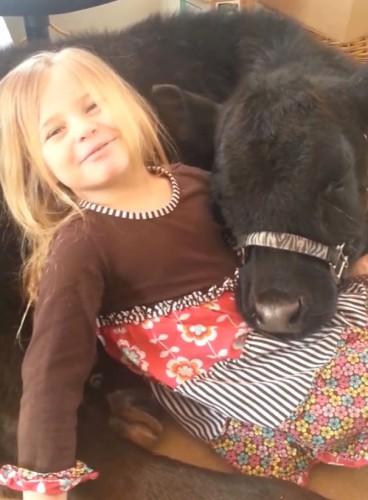 Девочка и теленок