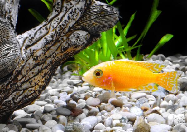 Как оформить аквариум в голландском стиле