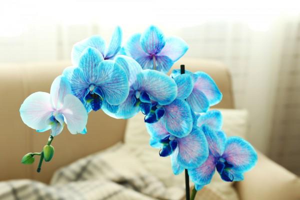 Как ухаживать за орхидеей советы