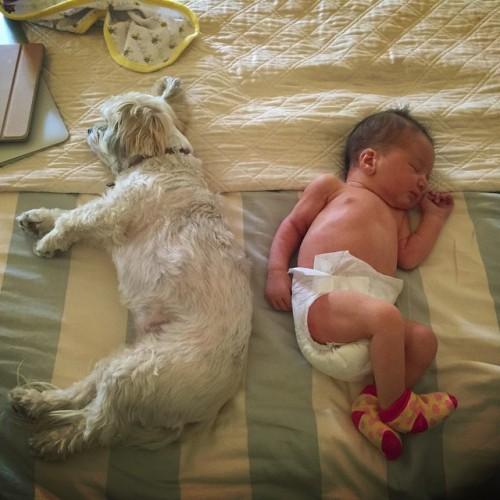 Новорожденная дочь Милы Йовович спит с собакой