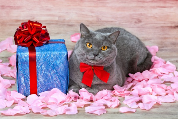 Котики тоже заслуживают подарков