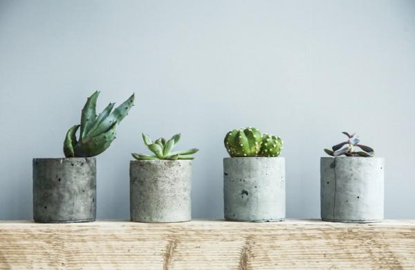Выставка кактусов и других суккулентов фото