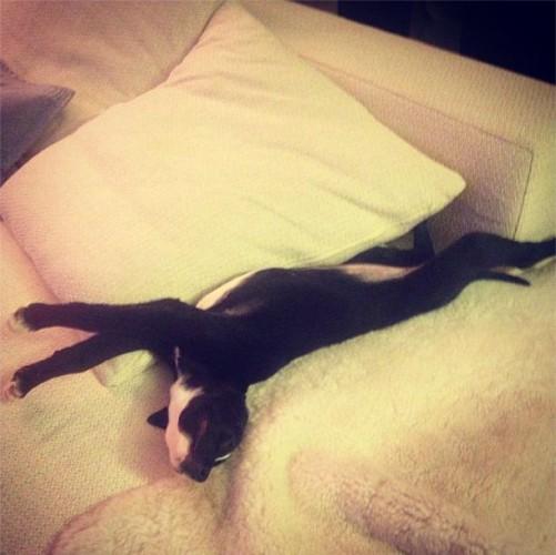 Сергей Лазарев приютил бездомного щенка